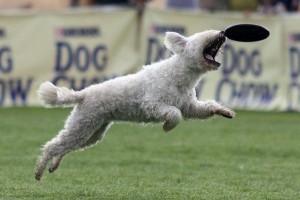 Újra levegőben a repülő kutyák!