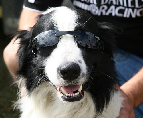 kutya-napszemuvegben