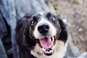 Tág pupillák, szapora légzés: ezek a hőguta jelei a kutyáknál