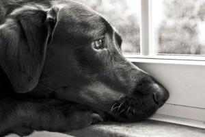 Amikor házikedvencünket gyászoljuk