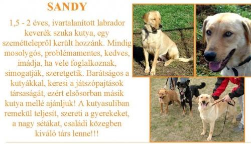 ingyen-kutya-sandy