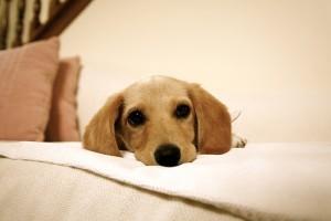 Gazdikereső Mancs-Rancs kutyák