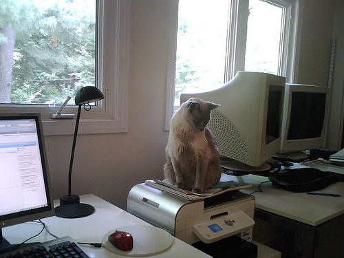 macska-az-irodaban