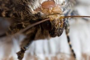 Lepke vagy moly? avagy a metamorfózis