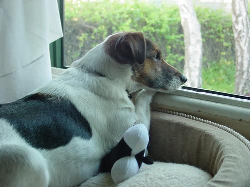 kutya-az-ablakban-ul