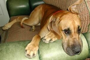 Az egyedüllét traumát okoz a kutyáknak