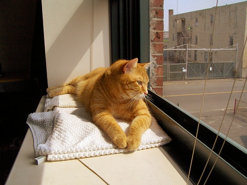 cicus-ablakban