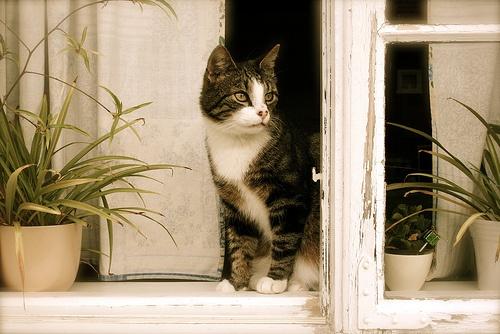 cicus-az-ablakban