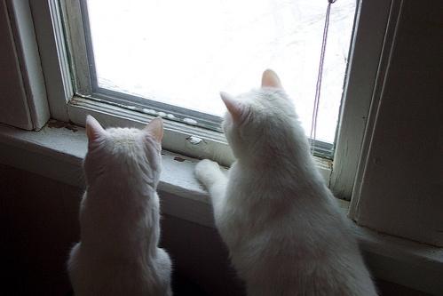 ket-cica-az-ablakban