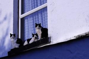Vigyázzunk a cicára, nehogy kisessen az ablakon!