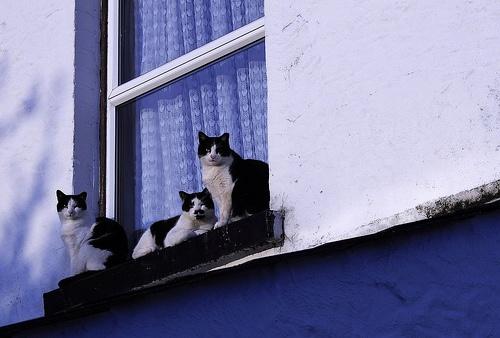 macskak-az-ablakban