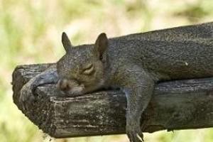 Plankoló mókus a Facebook-on