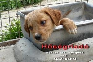 Állatkínzásért nem a meleget, hanem a gazdát büntethetik meg!