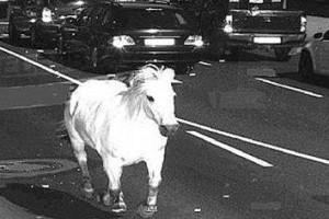 Németországban egy lovat kapott lencsevégre egy traffipax