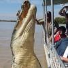 Brutus, az óriás krokodil