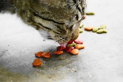 szaraz-macskaeledel