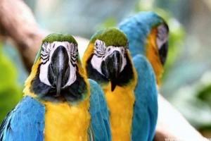 Megkülönböztető jegyek a madaraknál
