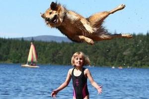 Blitzen, az ugrálós kutyus