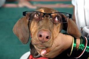 Honnan tudhatod, hogy öregedni kezd a kutyád?