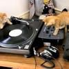 A három DJ cica -vicces videó