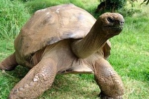 Jonathan, a 178 éves teknős