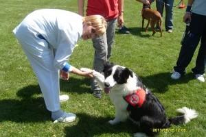 Az önkéntesség kutya jó dolog