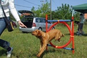 4Tappancs Kutyaiskola: Tudatos kutyanevelés módszer