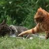 Tappancsosat játszanak a cicák - vicces videó
