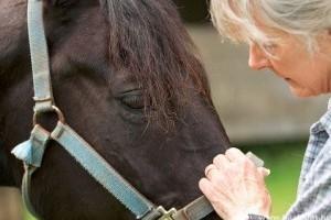 Hogyan használják a lézerkezelést a lovak gyógyításában?