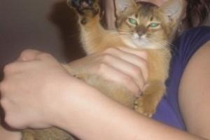 Nefertiti lett az augusztusi fotojáték nyertes cicája!