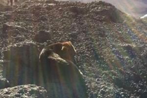 Hogy került kóbor kutya a Kilimandzsáróra?