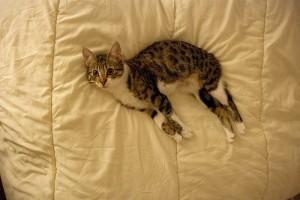 A macskadobálás a cicák új hobbija?