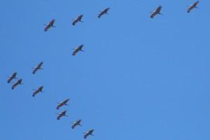 Közel 90 ezer madár esett a ciprusi orvvadászok áldozatául az idei vonulási szezonban