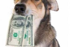 Hozzájárulást fizettethetnek az önkormányzatok a kutyatartókkal