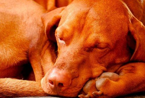 kutya epilepszia