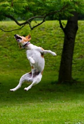 kutyasétáltatás, kutyafuttatás