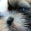 Ha túlnőtt a kutyus orrcimpája, a doki lecsippenti?