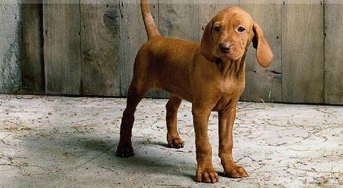 Eukanuba puppy tápok