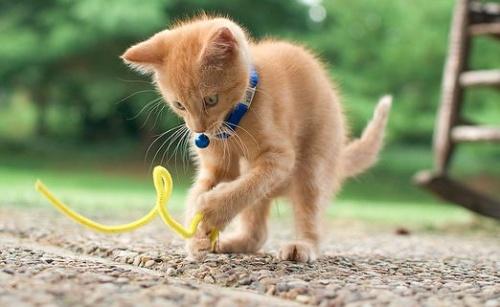 macska védőoltás