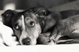 Miért remeg a korosodó kutya lába?