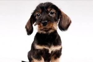 A legelső kutyamodell-verseny Magyarországon
