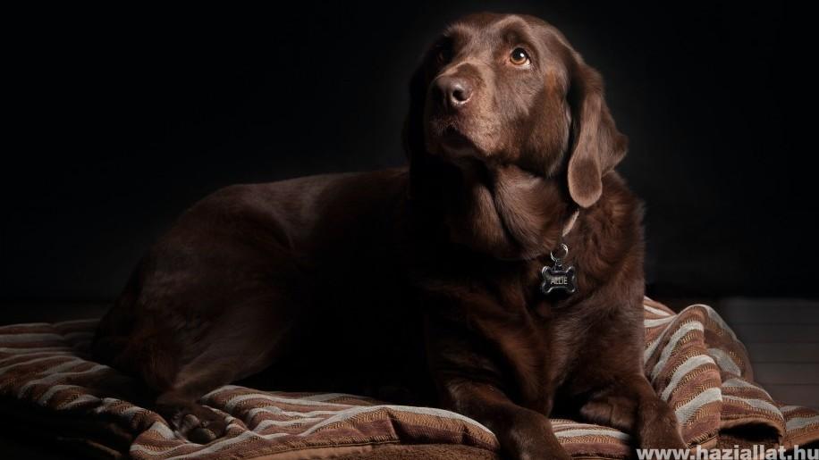 Májbetegség kutyáknál: okok, tünetek, kezelés