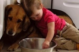Mivel etessem a kutyám: táppal vagy házi koszttal?