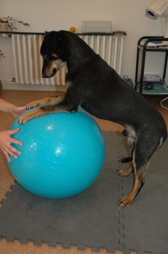 kisallat-fizioterapia-aktiv-mozgas
