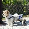 Gyógyulhat a kutya fizioterápiával is!