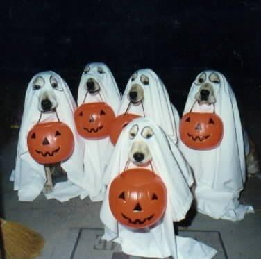 vicces_kutyaruha-halloween2