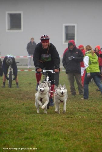 Domonkos László (kutyás kerékpározás két szibériai huskyval)
