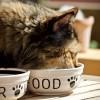 A macska helyes táplálása: húst hússal?