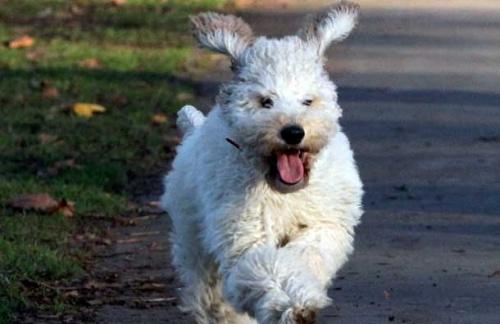 a_legboldogabb_brit_kutya-2