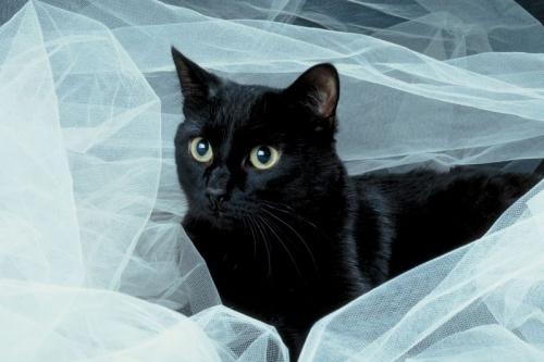 fekete-macska-illusztrci-1